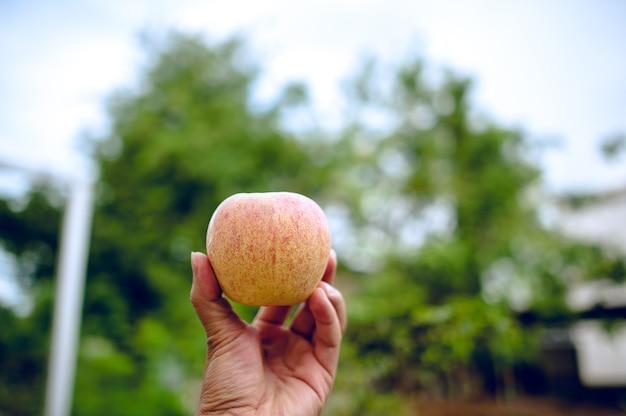 Mãos e maçãs de pessoas que amam cuidados de saúde. comendo maçãs com vitamina c, o conceito Foto Premium