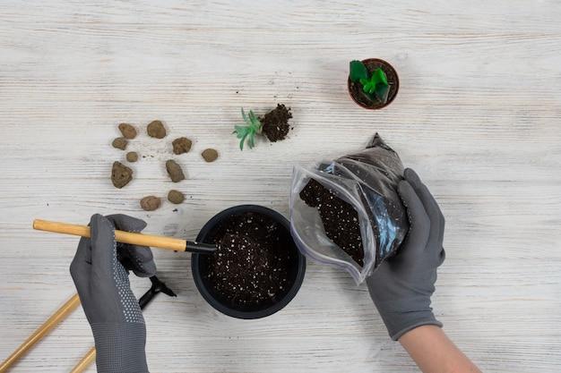 Mãos femininas com luvas de jardinagem cinza despejam a terra em um vaso para plantar um cacto Foto Premium