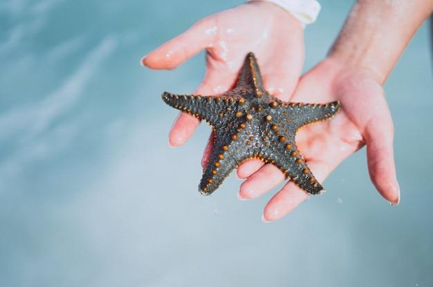 Mãos femininas fechem segurando peixe estrela Foto gratuita