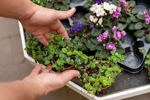 Mãos organizando variedade de plantas Foto gratuita