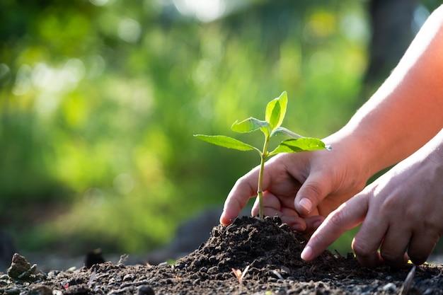 Mãos plantando uma árvore. Foto Premium