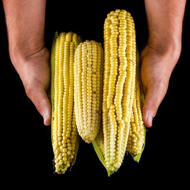 Mãos, segurando, milho, pilha, frente, vista Foto gratuita