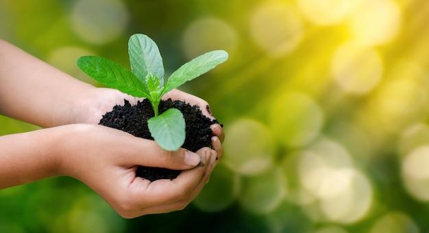 Mãos segurando mudas crescentes Foto Premium