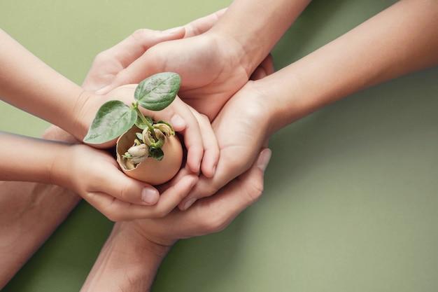Mãos segurando mudas em cascas de ovos, educação montessori, responsabilidade social corporativa de rse, Foto Premium