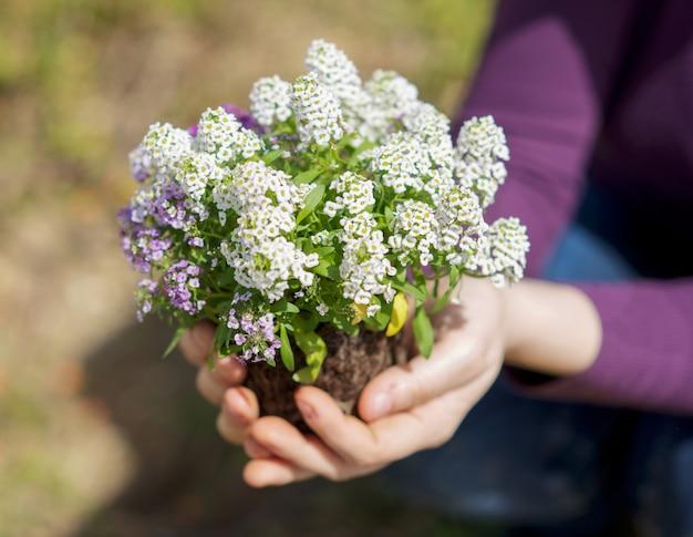 Mãos, segurando, pequeno, planta Foto Premium