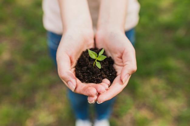 Mãos, segurando, pequeno, planta Foto gratuita