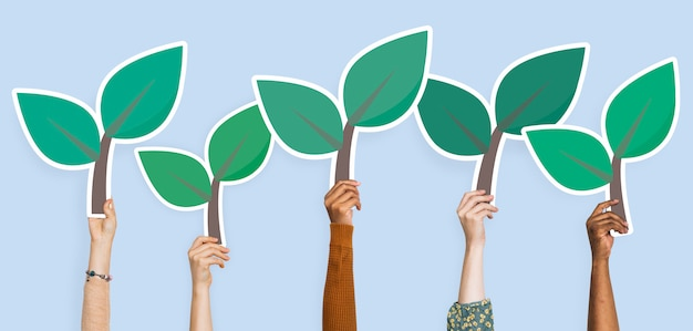 Mãos, segurando, planta, deixa, clipart Foto Premium