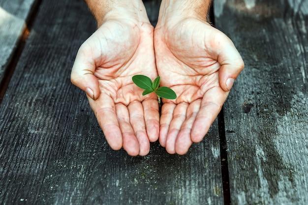 Mãos, segurando, um, broto, um, pequeno, planta, crescendo, de, um, árvore Foto Premium