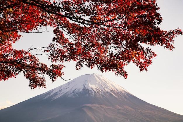 Maple tree com folhas vermelhas sob a luz do sol e uma montanha coberta de neve Foto gratuita