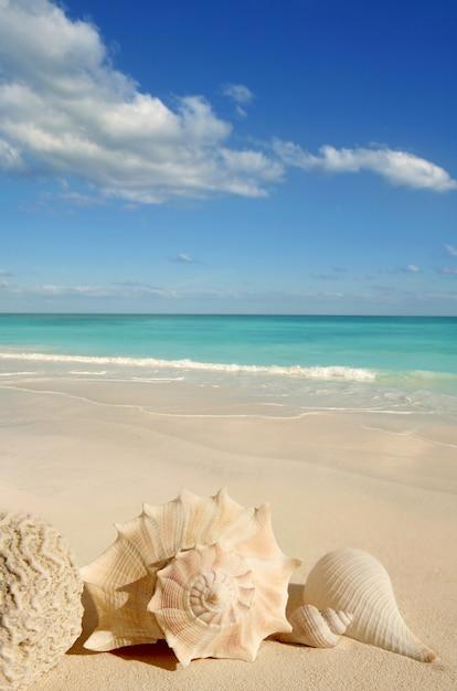 Mar conchas estrela do mar tropical areia turquesa do caribe Foto Premium