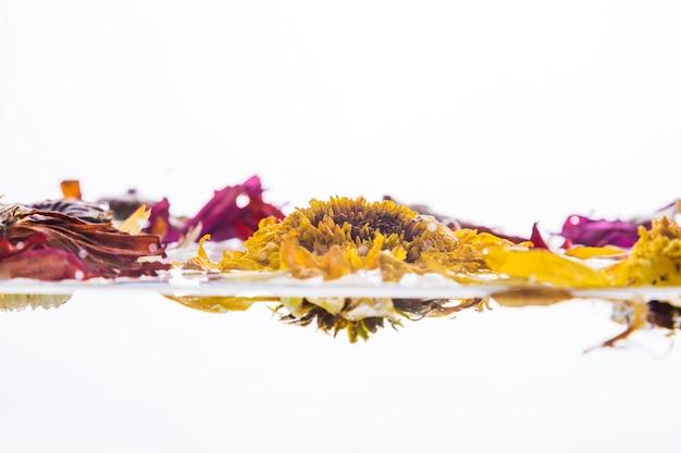 Margaridas coloridas molhadas sobre fundo branco Foto gratuita