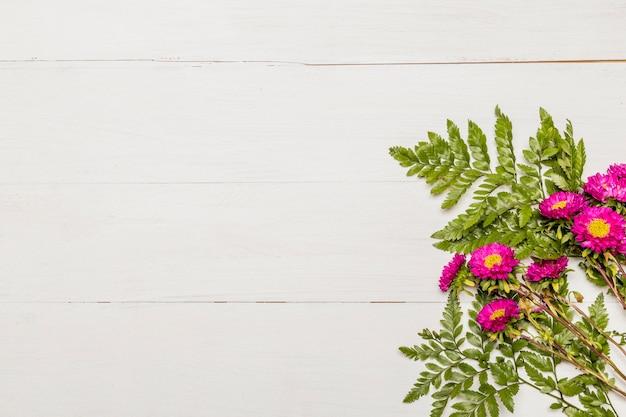 Margaridas cor-de-rosa com as folhas no fundo branco Foto gratuita