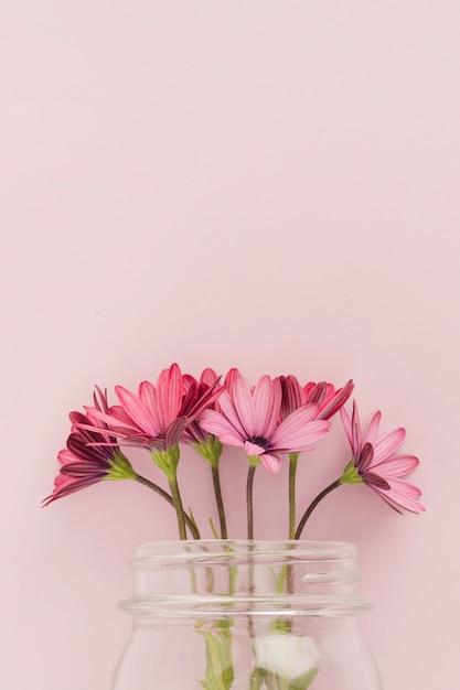 Margaridas cor-de-rosa dentro do frasco de vidro Foto gratuita