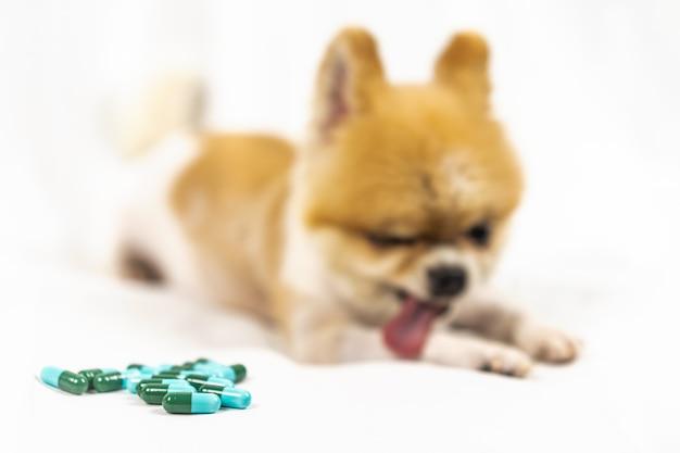 Medicina veterinária, animal de estimação, animais Foto Premium