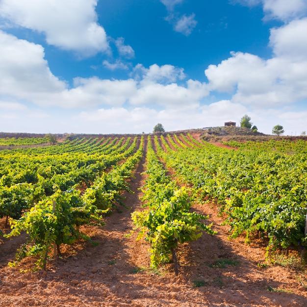 Mediterrâneo vinhas em utiel requena na espanha Foto Premium