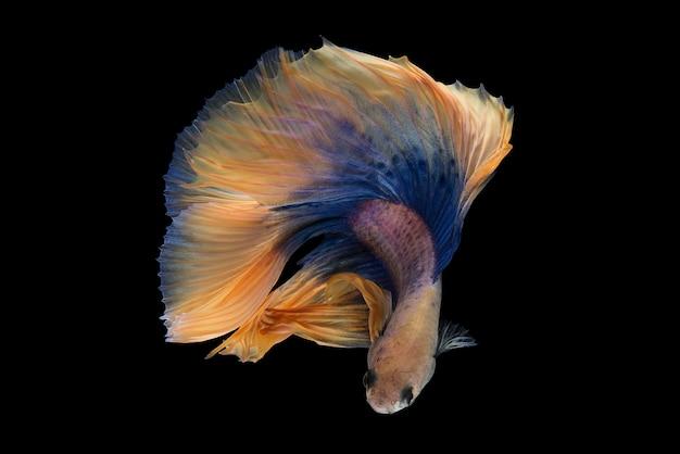 Meia lua betta fish Foto gratuita