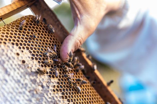 Mel de abelhas caminhando em colmeias de madeira Foto gratuita