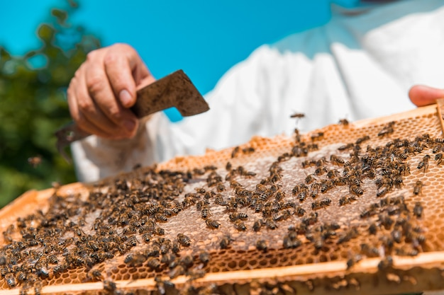 Mel de abelhas em uma colmeia de madeira. foto de alta qualidade Foto gratuita