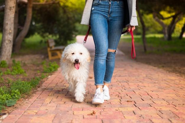 Menina jovem, com, dela, cão, em, um, parque Foto Premium