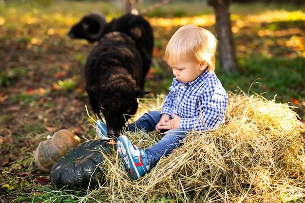 Menina loira encaracolada na jaqueta jeans e botas cor de rosa, alimentando ovelhas domésticas negras. conceito de vida do agricultor Foto Premium