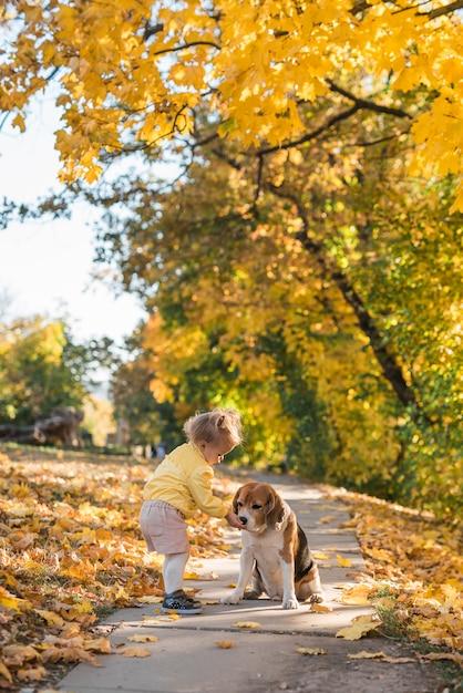 Menina pequena, alimentando seu ponto de beagle no parque Foto gratuita
