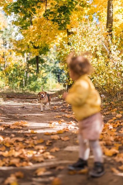 Menina que olha seu cão de estimação ao andar no caminho na floresta Foto gratuita