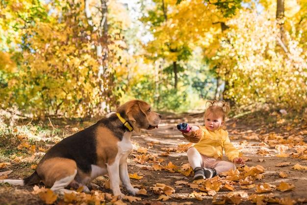 Menina, sentando, com, dela, cachorro beagle, em, outono, folheia, em, floresta Foto gratuita