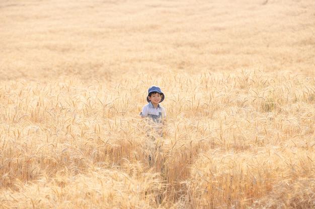 Menino asiático que tem o divertimento e que joga em um campo de trigo no verão. Foto Premium