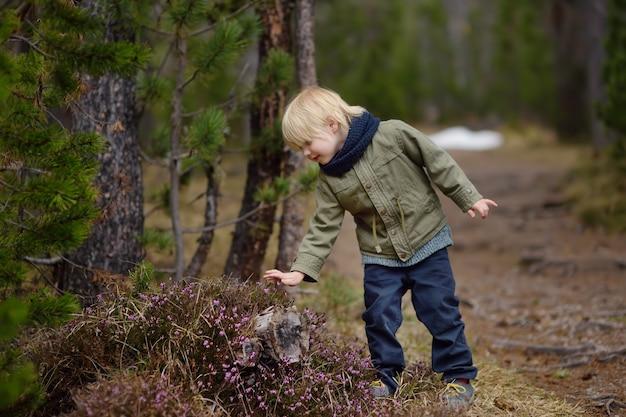Menino bonitinho examina uma heather bush no parque nacional da suíça na primavera Foto Premium