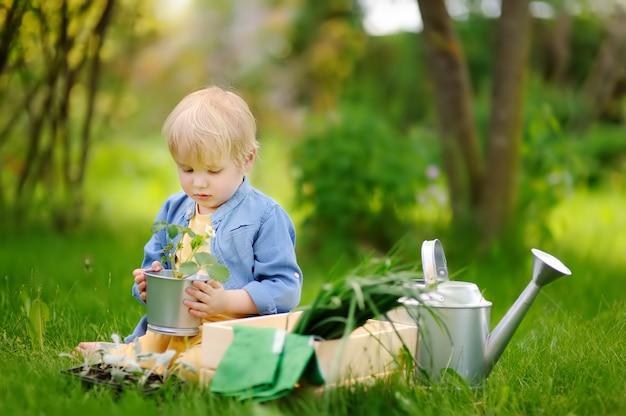 Menino bonitinho segurando mudas em panela de ferro no jardim interno em dia de verão Foto Premium