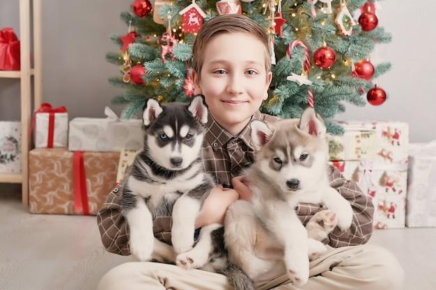 Menino de criança com cachorros husky cachorros e árvore de natal. Foto Premium