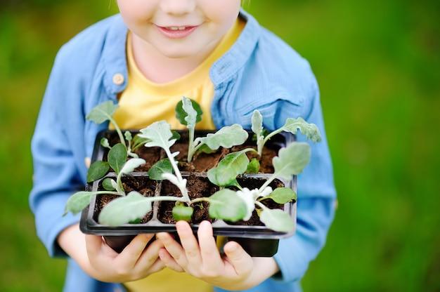 Menino, segurando, seedling, em, plástico, potes, ligado, a, jardim doméstico, em, verão, dia sol Foto Premium