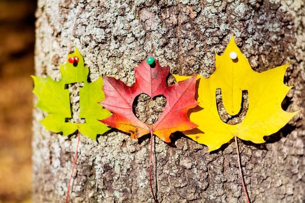 Mensagem do amor na casca de árvore Foto gratuita