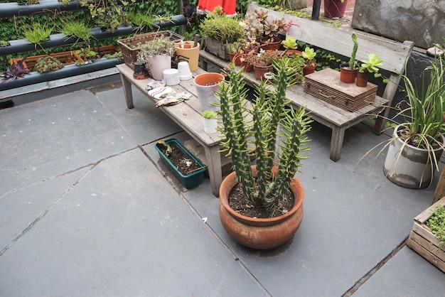 Mesa e bancada cheia de plantas Foto gratuita