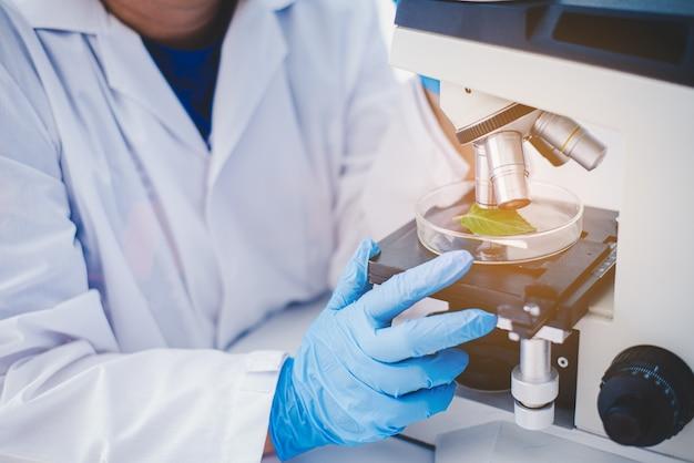 Métodos experimentais de melhoramento de plantas de um tubo de ensaio em uma pesquisa experimental em laboratório. Foto Premium