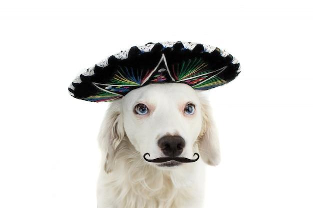Mexican mariachi dog chapéu desgastando e um mustache ou mustache. Foto Premium