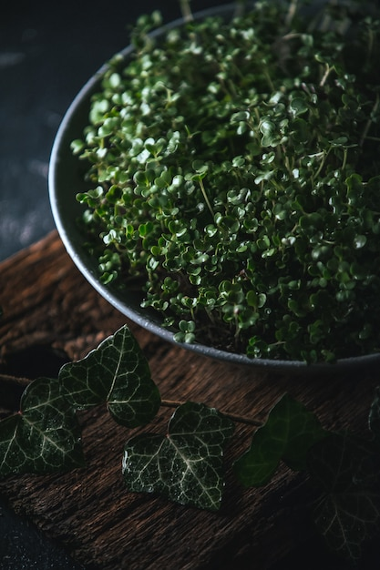 Microgreen em um prato cinza em um rústico de madeira Foto Premium
