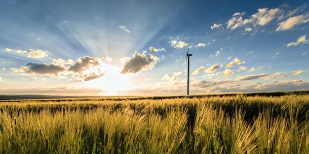Milharal com moinho de vento Foto gratuita