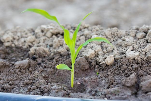 Resultado de imagem para irrigação jovem