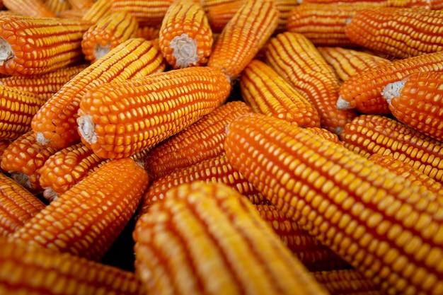 Milho para alimentação animal, textura de milho. milhos amarelos como pano de fundo Foto Premium