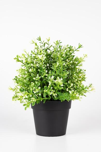 Mini árvore de jasmim Foto Premium