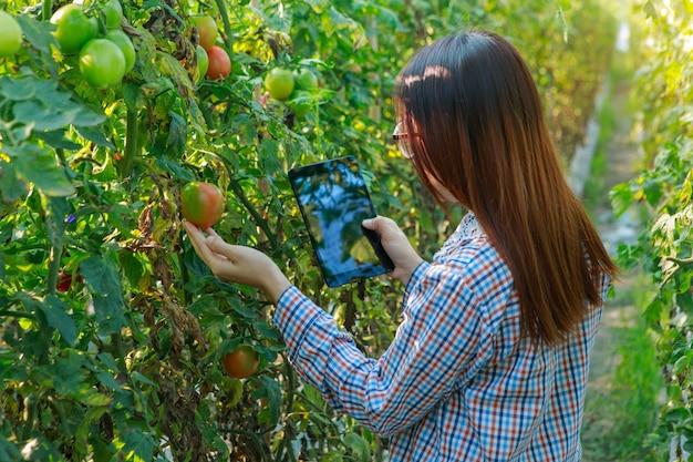 Moça que verifica plantas de tomate da qualidade pela tabuleta. conceito de agricultura e produção de alimentos. Foto Premium
