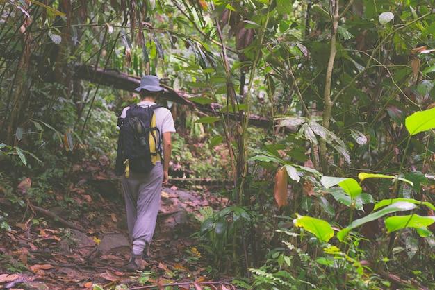 Mochileiro que explora a floresta tropical de bornéu Foto Premium