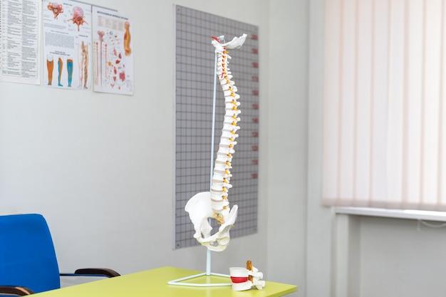 Modelo anatômico da coluna vertebral em consultório médico Foto Premium