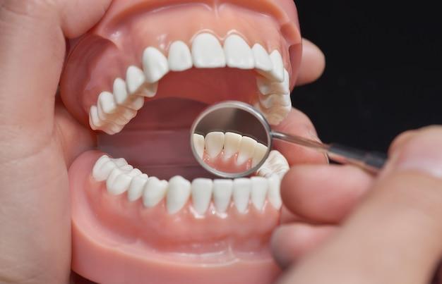 Modelo odontológico, observação usando espelho dental Foto Premium