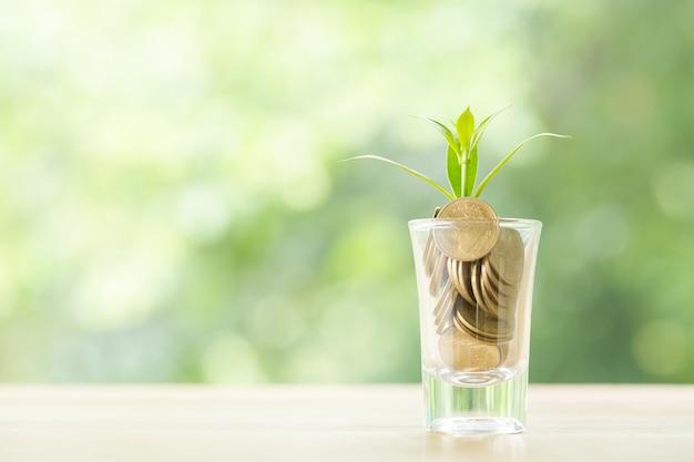Moedas em um copo com uma pequena árvore Foto gratuita