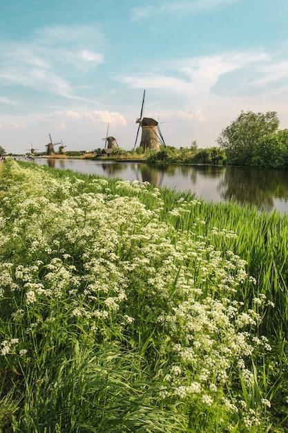 Moinhos de vento holandeses tradicionais com grama verde em primeiro plano, holanda Foto gratuita