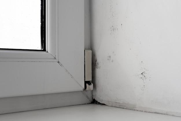 Molde no canto da janela em uma parede branca Foto Premium