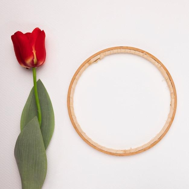 Moldura circular de madeira perto da tulipa vermelha sobre fundo branco Foto gratuita