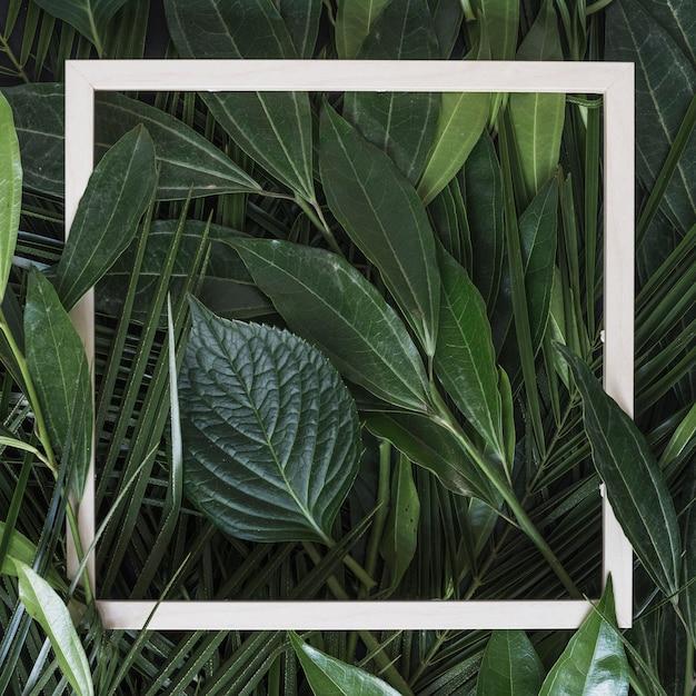Moldura de borda branca no galho de folhas verdes Foto gratuita